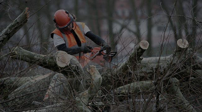 Wadsworth Tree Service
